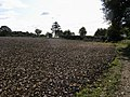 Field off Stanley Hill - geograph.org.uk - 1052080.jpg