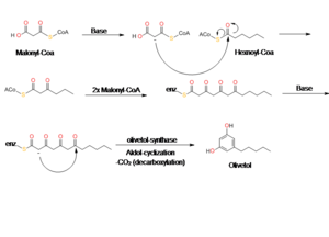 Olivetol - olivetol synthase