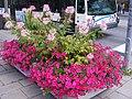 Fleurs (2083532718).jpg