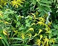 Fleurs jaunes au Parc floral.jpg