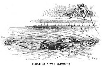Plunge for distance - Floating after plunging
