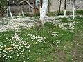Flora vo Polog lete (2).JPG