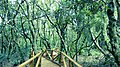 Flora y fauna en fray jorge 03.jpg