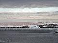 FloreAntarctique (7).jpg