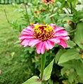 Flower 778.jpg