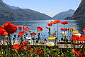 Flowers with Lago di Lugano.JPG