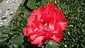 Focused flower.jpg