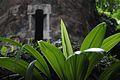 Folhas do Parque Lage.jpg