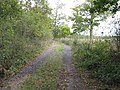 Footpath and farm track to Blackbrook Farm - geograph.org.uk - 1546038.jpg