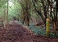 Footpath crosses trackbed near Stockton reservoir - geograph.org.uk - 1253858.jpg