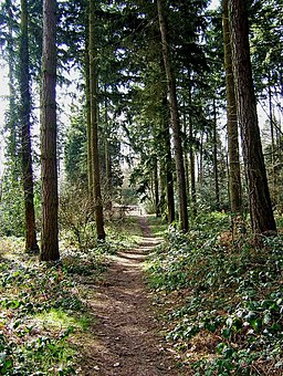 Footpath in Kingsford Forest Park - geograph.org.uk - 1185923