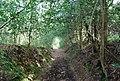 Footpath through Barnsnap Wood - geograph.org.uk - 1288836.jpg