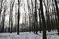 Forêt départementale de Beauplan sous la neige 2012 43.jpg