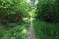 Forêt domaniale de Bois-d'Arcy 10.jpg