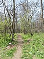 Forest, south path, 2018 Sashalom.jpg
