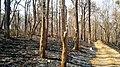 Forest Fire @ Wayanad Wildlife Sanctuary, Muthanga Range - panoramio (12).jpg