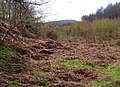 Forest clearing - geograph.org.uk - 1421060.jpg