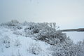 Forest near Ob river in Altai Region 03.JPG