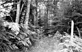 Forest path, Orcas Island, ca 1910s (WASTATE 2648).jpeg