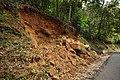 Forest roadside erosion DSC 5134.jpg
