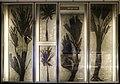 Fossili di piante preistoriche.jpg