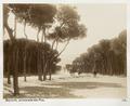 Fotografi från Beirut - Hallwylska museet - 104296.tif