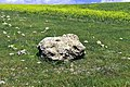 Fragment of the Paleolithic megalith of Barda Balka, Sulaymaniyah, Iraq, c. 100000-60000 BCE. The megalith was deliberately demolished.jpg