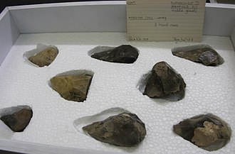Swanscombe - Box of 8 hand axes from the middle gravels of Barnfield Pit, contained in the British Museum.