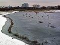 Frozen^ Wetlands Centre, Barnes, London. - panoramio.jpg