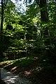 Fußweg Felsengarten Sanspareil 04082019 002.jpg