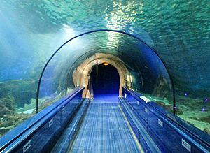 Marineland of Antibes - The Shark Tunnel