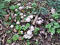 FungiHilden.JPG