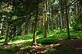 Gölcük Forest - panoramio.jpg