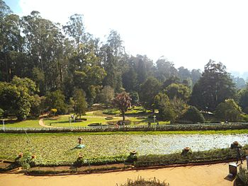 Garden of garden.jpg
