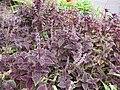 Gardenology.org-IMG 2540 rbgs11jan.jpg