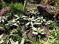 Gardenology.org-IMG 2780 hunt0903.jpg