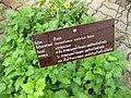 Gardenology.org-IMG 7958 qsbg11mar.jpg
