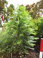 Gardenology.org-IMG 8544 rbgc10dec.jpg