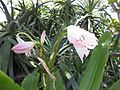 Gardenology.org-IMG 9670 rbgm10dec.jpg