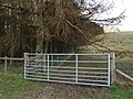 Gate and larches, Black Knowe. - geograph.org.uk - 378318.jpg