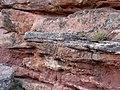 Geology in Tiermes (Soria, Spain) - Buntsandstein - cross-bedding 05.jpg