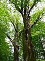 Gießen-Wieseck, Adam und Eva 05.jpg
