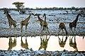 Giraffe Group 2019-07-24.jpg