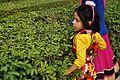 Girl at Maze - Science Park - Science City - Kolkata 2015-12-31 8457.JPG