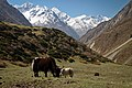 Globallivesproject Mingmar Lama 2013 bod Tsum Valley NP-GA 015 (16157300098).jpg