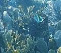 Glover's Reef 2-15 (33332859095).jpg
