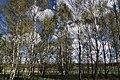 Gmina Narew, Poland - panoramio (173).jpg