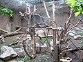 Gorillasinnen 1664.jpg