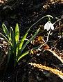 Gradina Botanica (8553142010).jpg