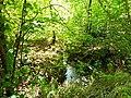 Graniczny Potok (dopływ Trzebinki), Góry Opawskie 2020.09.08 03.jpg